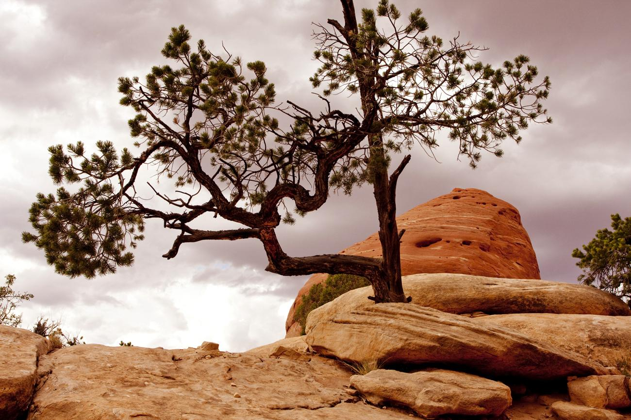 Lone pine by giuseppedr