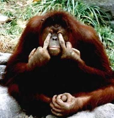 [Immagine: orangotango.jpg]