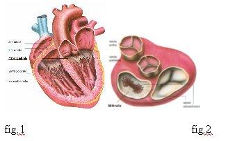 Esercizio ipertensione Sergey Bubnovsky - Dibazol con glucosio in polvere