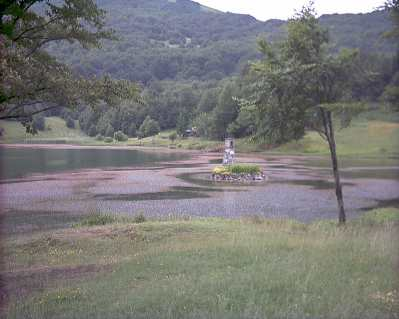 Lago calamone (r.e.)