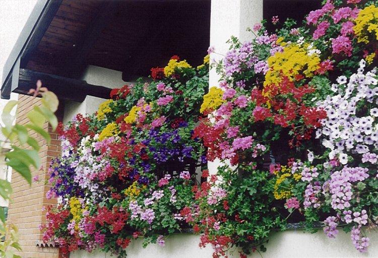 Balconi fioriti chi siamo for Gerani tirolesi