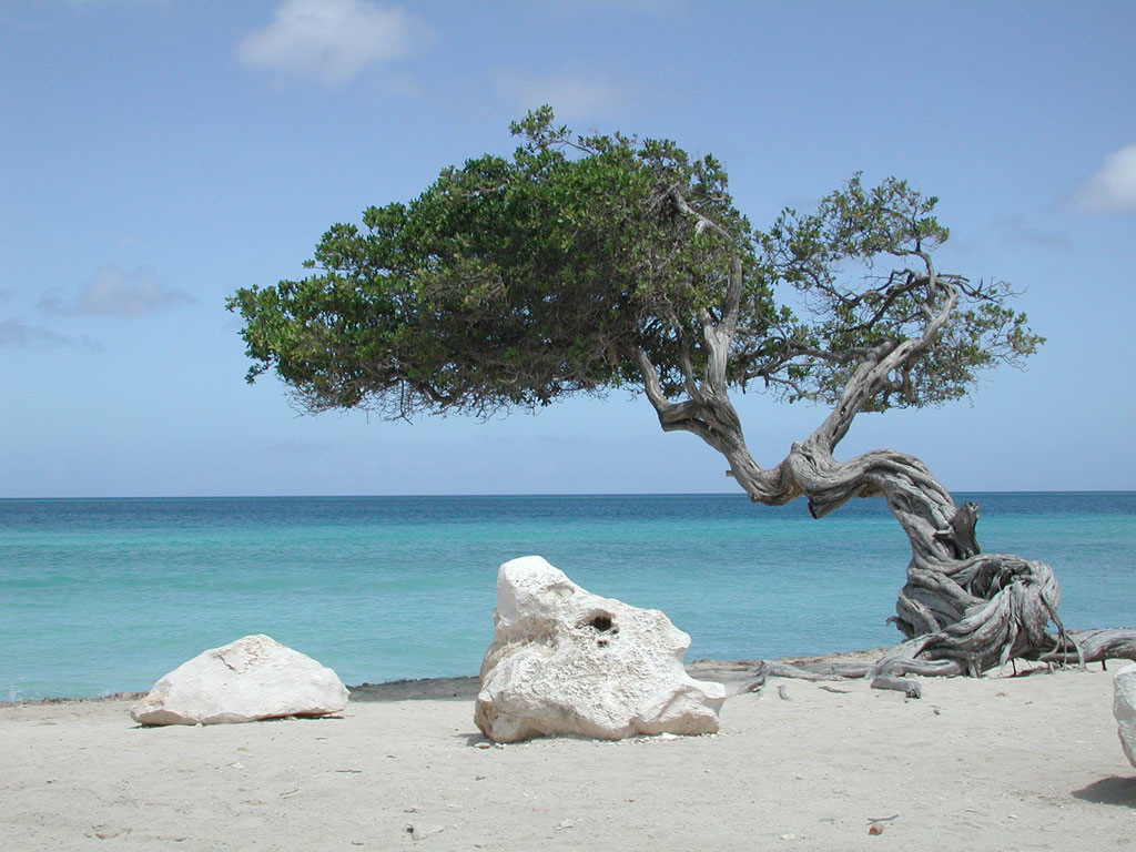 http://web.tiscali.it/bluevillage/i/spiaggia3.jpg