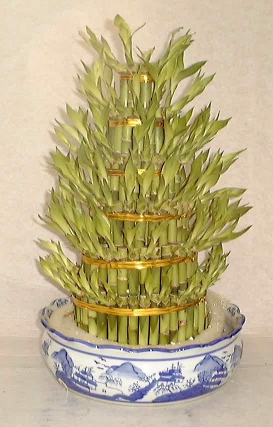 Volainrete blog of legear il bamb assorbe le for Bamboo coltivazione