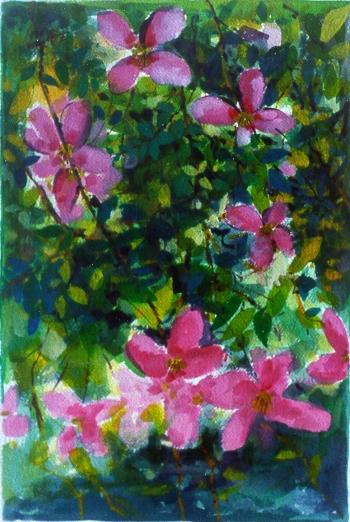 arbusti con fiori rosa