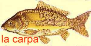 Carpfishing carp fishing carpa carpe pesca pescare laghi for Carpa koi allevamento