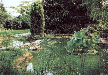 Idroflora - piante acquatiche e palustri, ninfee, fior di loto