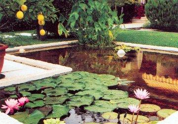 Idroflora piante acquatiche e palustri ninfee fior di loto for Piante palustri laghetto