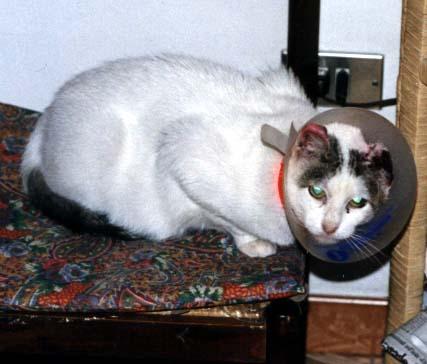 Pieretto c storia di gatto fritz - Gatto solo in casa per 15 giorni ...