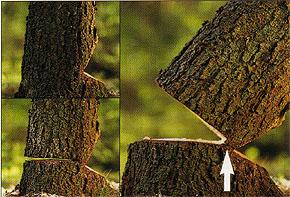 taglio alberi con motosega video er