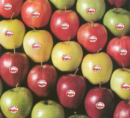 Le mele - Mele fuji coltivazione ...