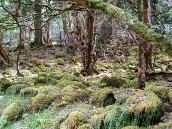 Risultati immagini per Progetto di tutela ambientale bioregionale boschi