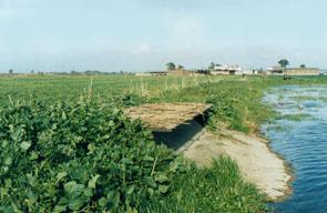 Il bracconaggio for Vasca per anatre